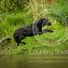 Wrencourt Retriever training July-92