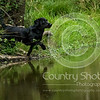 Wrencourt Retriever training July-88