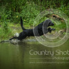 Wrencourt Retriever training July-164