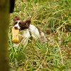 WGDS AV Spaniel Open Working Test March 18th 2017-8