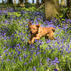Bluebell Dog Shoot Saturday-9