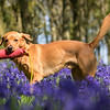 Bluebell Dog Shoot Saturday-6