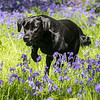 Bluebell Dog Shoot Saturday-13