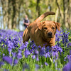 Bluebell Dog Shoot Saturday-5