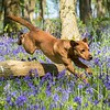 Bluebell Dog Shoot Saturday-11
