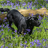 Bluebell Dog Shoot Saturday-15