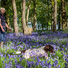 Bluebell Shoot Thrift Wood Sunday May 6th-2