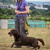 Gundog Club Level 1 & 2 Asessment Helen Phillips-19