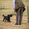 Gundog Club Level 1 & 2 Asessment Helen Phillips-4