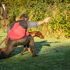 Gundog Club Asessments Ryden Farm 7D-8