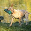 Gundog Club Asessments Ryden Farm 7D-17