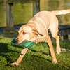 Gundog Club Asessments Ryden Farm 7D-19