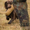 WGDS Cold Game Training Day Aug 12th 7D-62
