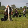 Midlands Flatcoated Retriever Working Test Curborough May-153