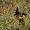 WGDS Working Test Brockhill Spaniels April 2018-201