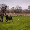 Clicker Gundog Training Sunday 25th November-11
