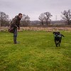 Clicker Gundog Training Sunday 25th November-8