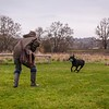 Clicker Gundog Training Sunday 25th November-15