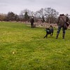 Clicker Gundog Training Sunday 25th November-17
