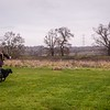Clicker Gundog Training Sunday 25th November-13