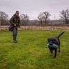Clicker Gundog Training Sunday 25th November-9