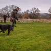 Clicker Gundog Training Sunday 25th November-12