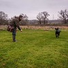 Clicker Gundog Training Sunday 25th November-7