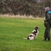 Clicker Gundog Training Sunday 25th November-1