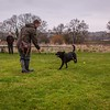 Clicker Gundog Training Sunday 25th November-10