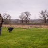 Clicker Gundog Training Sunday 25th November-14