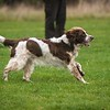 Clicker Gundog Training Sunday 25th November-2