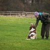 Clicker Gundog Training Sunday 25th November-3