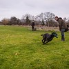 Clicker Gundog Training Sunday 25th November-19