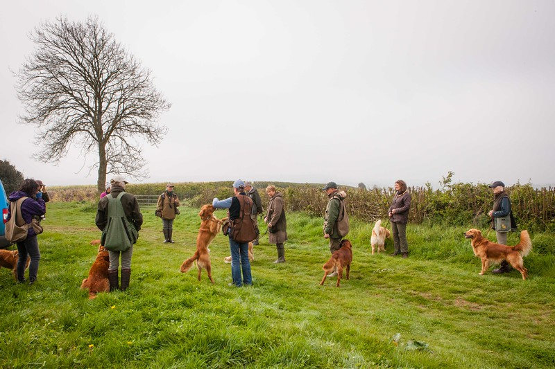 Wedgnock Retriever Training Day Northants Day 2 5D (1 of 17)
