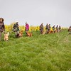 Wedgnock Retriever Training Day Northants Day 2 5D (6 of 17)