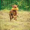 WGDS Scurry Day 7D-146