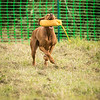 WGDS Scurry Day 7D-145