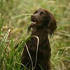WGDS Spaniel Training Day with Steve Bates 7D-4