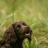 WGDS Spaniel Training Day with Steve Bates 7D-5