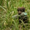 WGDS Spaniel Training Day with Steve Bates 7D-7