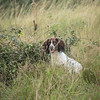WGDS Spaniel Training Long Itchington 7D-13