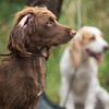 WGDS Spaniel Training Long Itchington 7D-5