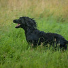 WGDS Spaniel Training Long Itchington 7D-14