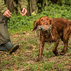 Hampshire Gundog Society Open Cocker Spaniel FT Kenilworth-66