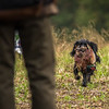 Hampshire Gundog Society Open Cocker Spaniel FT Kenilworth-96