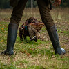 Hampshire Gundog Society Open Cocker Spaniel FT Kenilworth-120