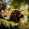 Hampshire Gundog Society Open Cocker Spaniel FT Kenilworth-128