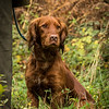 Hampshire Gundog Society Open Cocker Spaniel FT Kenilworth-224