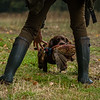 Hampshire Gundog Society Open Cocker Spaniel FT Kenilworth-121