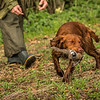 Hampshire Gundog Society Open Cocker Spaniel FT Kenilworth-67